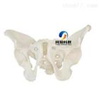 THM-123男性骨盆模型|骨骼