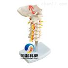 THM-133颈椎带颈动脉模型|骨骼