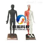 型號THZY220742寸多媒體人體針灸穴位交互數字平臺