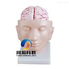 THM-318头部附脑动脉模型|解剖
