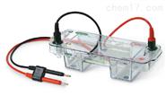 美国伯乐Mini-Sub® Cell GT Cell水平电泳槽