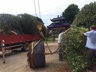 聊城大树控根器当天发货