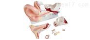 新型大耳解剖模型