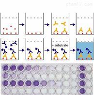 羊超氧化物歧化酶(SOD)ELISA检测试剂盒
