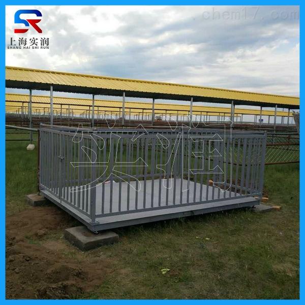 带围栏称猪电子秤|猪笼秤厂家
