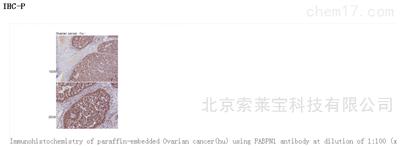 Anti-PABPN1 Polyclonal Antibody