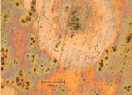 HPLC色谱柱和分析系统钝化的福音