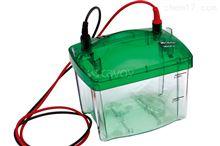 Mini P-4 小型垂直电泳系统 电泳设备