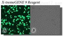 X-tremeGENE 9 DNA Transfection Reagent