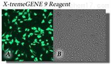 X-tremeGENE 9 DNA 转染试剂