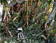 SYE-GG04植物冠层监测系统