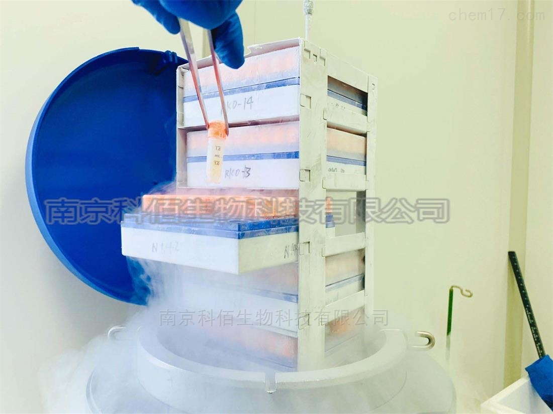 SW1783人脑星形细胞瘤细胞株