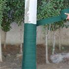 园林树木养护带