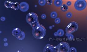 SH-SY5Y人神经母细胞瘤-SH-SY5Y
