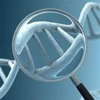 DNA甲基化实验服务