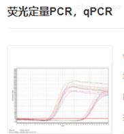 荧光定量PCR,qPCR实验服务