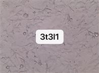 3T3-L1小鼠胚胎成纤维细胞3T3-L1