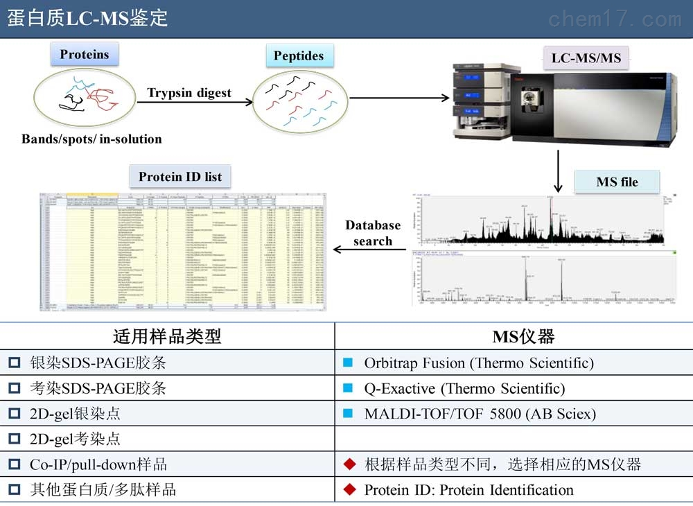 蛋白质LC-MS鉴定服务