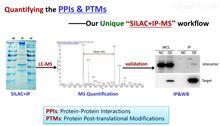 SILAC+IP-MS-蛋白质互作定量分析整体服务