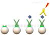 cRGD/CPP-peg-链霉亲和素