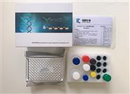 小鼠黑色素细胞抗体(MC Ab)ELISA试剂盒