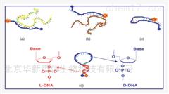 DN-1597DN-1597 chemgenes