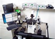 小鼠离体肌肉测试系统