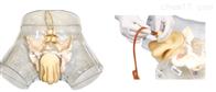 KAC/F1透明男性导尿模型