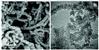 手性石墨相氮化碳聚合物半导体光催化剂
