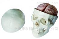 KAC/104E头骨带8部分脑动脉模型