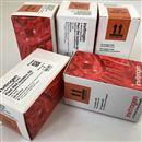 Thermo PA542808KYNU ANTIBODY 100 microliter