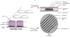 细胞微图案培养皿培养板