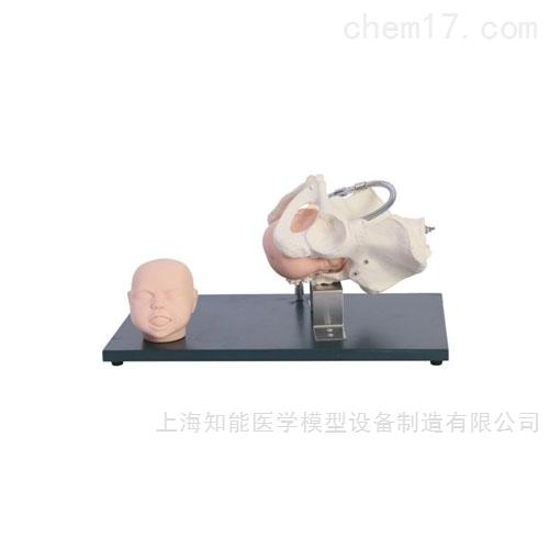 带胎儿头部骨盆检查训练模型