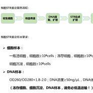 小鼠绒毛膜促性腺β(β-CG)ELISA Kit