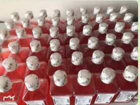DMEM/F12(1:1)液体培养基  传秋专供