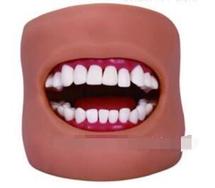 口腔护理模型