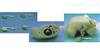 KAH-L63前列腺检查模型2
