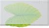 JT0101A高抗撕硅胶板
